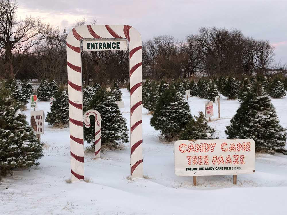 Tree farm entrance with candy cane arch